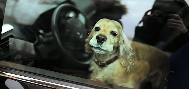 Display image of dog in car
